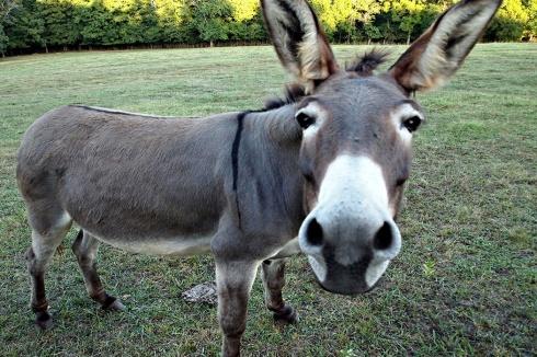 donkey1050x700.jpg